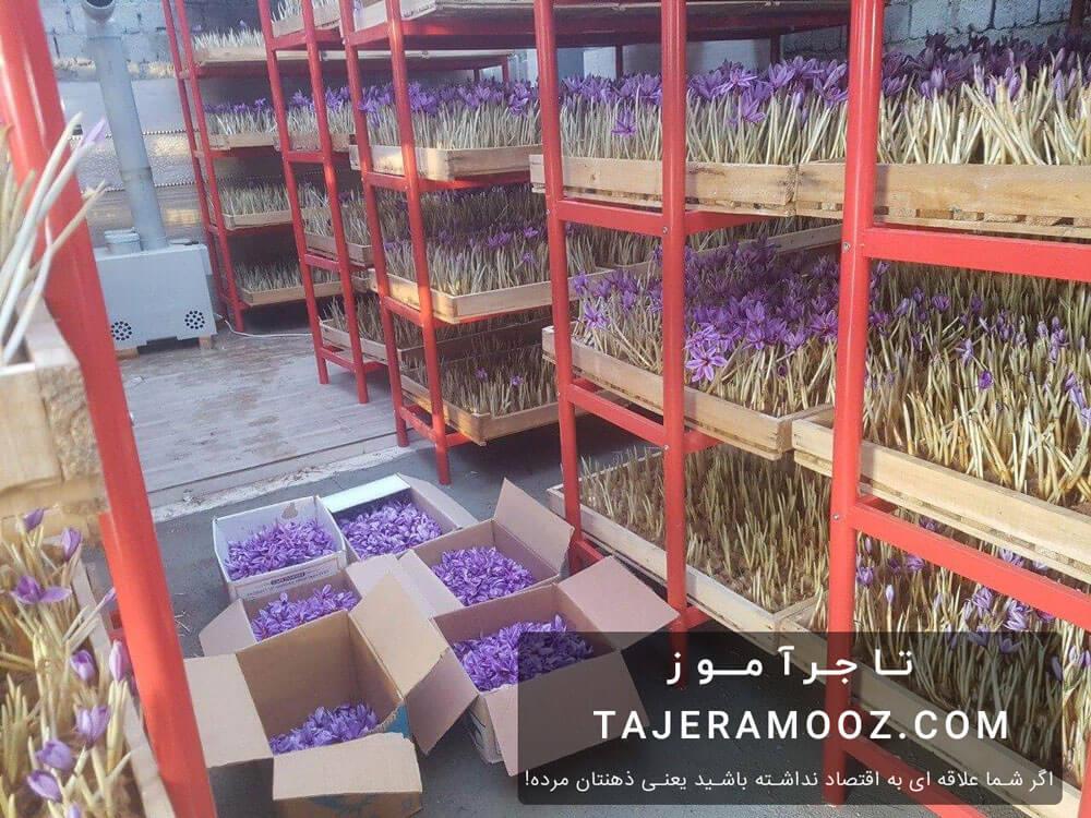 کسب درآمد با کاشت زعفران در خانه