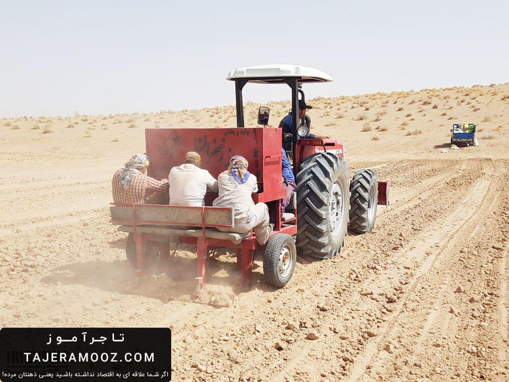 برآورد هزینه کاشت زعفران