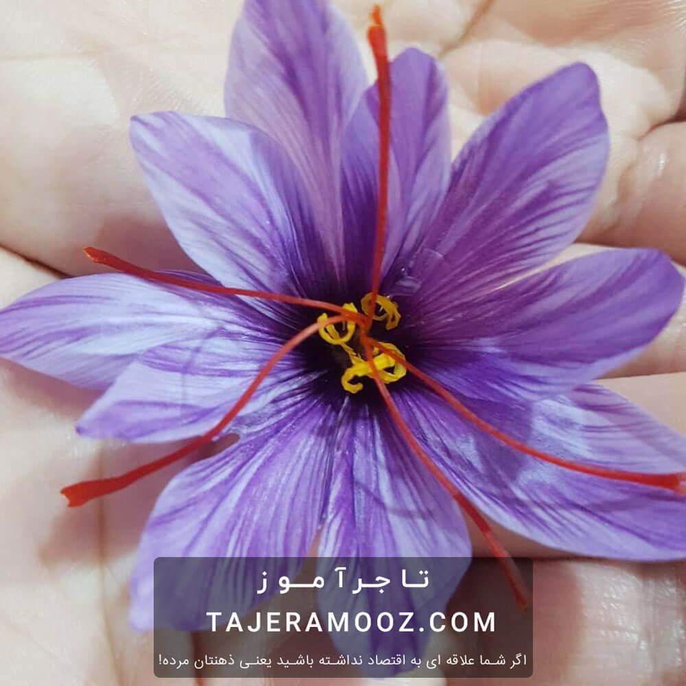 آیا خرید گل زعفران سود دارد