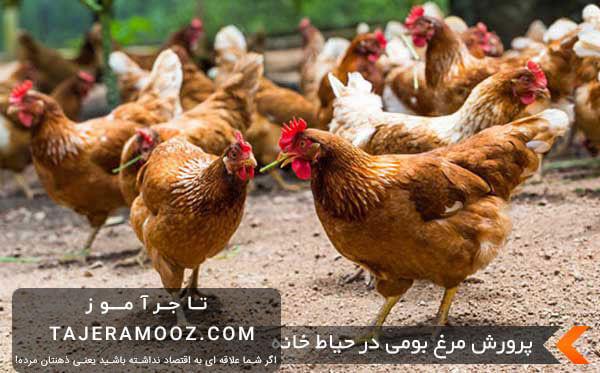 پرورش مرغ خانگی در منزل